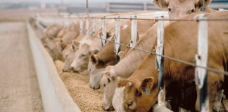 animal feed testing Market