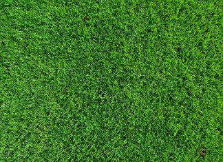 turf grass and turf solutions market