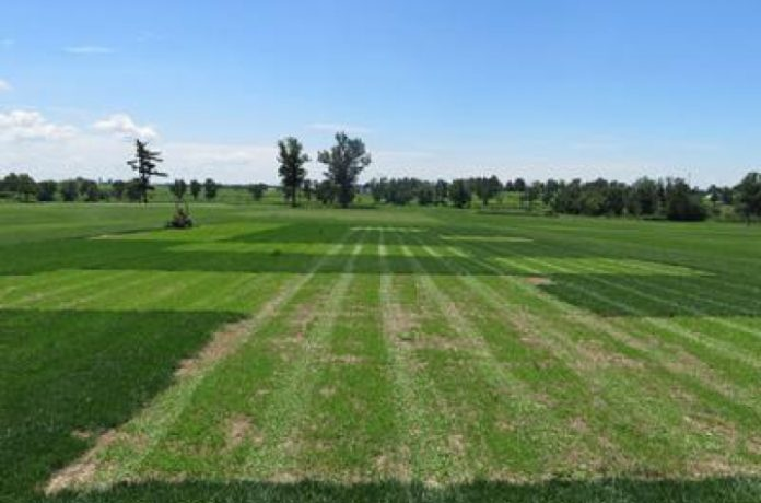 Turf, Ornamentals and Forage Inputs Market