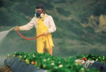 Global Pesticides Market
